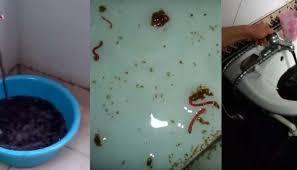 Vi sinh vật sống trong ống nước, gây hại đến sức khoẻ gia đình